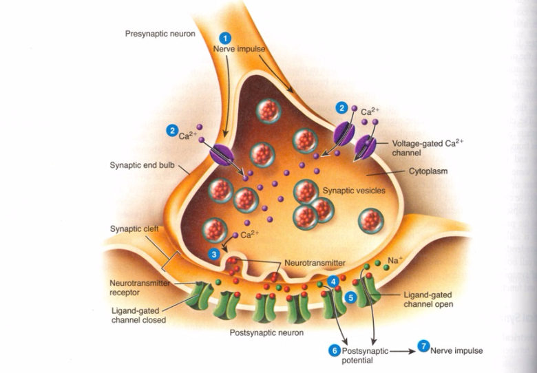 Mechanism of Action of Antidepressants